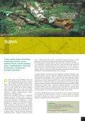 Mŕtve drevo - živé lesy - Page 3