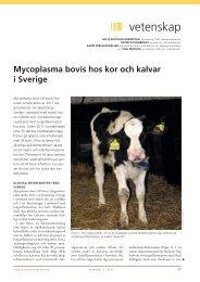 Om mykoplasma i SVT nr 13, 2012 (pdf) - SVA