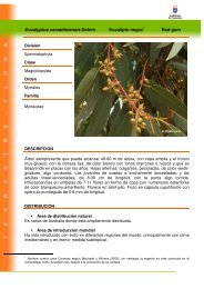 Eucalyptus camaldulensis Dehnh Eucalipto ... - Interreg Bionatura