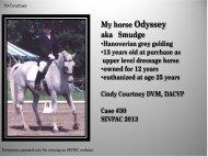My horse Odyssey aka Smudge