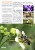Les abeilles sauvages - Page 3