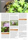 Les abeilles sauvages - Page 4