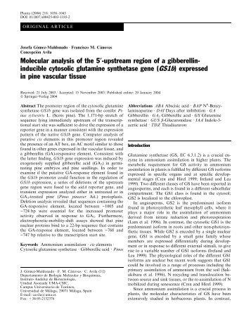 (GS1b) expressed - Departamento de Biología Molecular y Bioquímica
