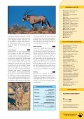 Från Cape till Kalahari - Solresor - Page 5
