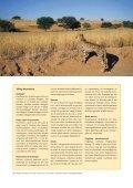 Från Cape till Kalahari - Solresor - Page 6