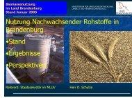 Biomassenutzung im Land Brandenburg - MUGV