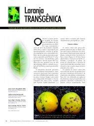 Laranja TRANSGÊNICA - Biotecnologia