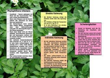 Phytophthora infestans Direkte Keimung Indirekte ... - Plantahof