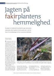 Jagten på fakirplantens hemmelighed (pdf) - Aktuel Naturvidenskab