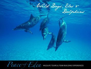 Wild Dogs, Eles & Dolphins