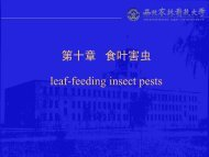 第十章食叶害虫
