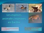 Les espèces animales invasives en Sarthe - Master Économie ...