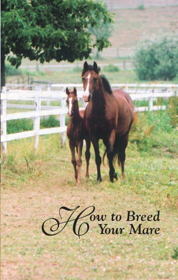 How to Breed Your Mare - American Morgan Horse Association