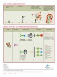 TSA Signal Amplifi cation for immunohistochemistry (ihc ... - Page 4