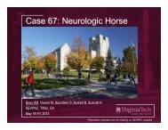 Case 67: Neurologic Horse