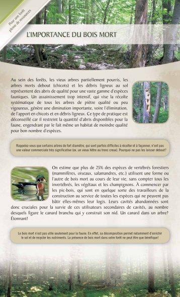 L'importance du bois mort - Nature-Action Québec