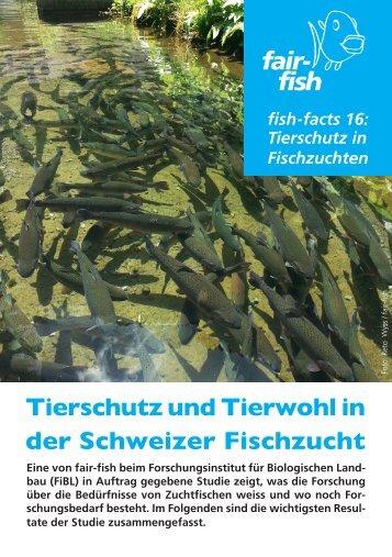 fish-fact 16 - Fair Fish