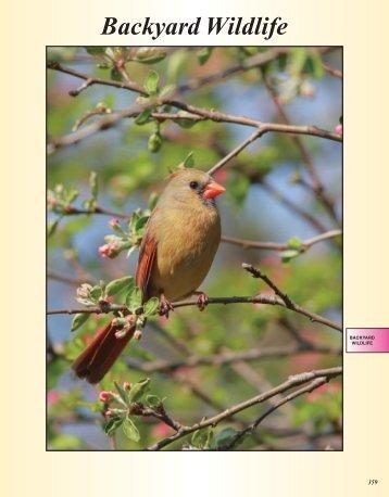 Bird Feeders - Plushtex