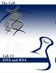 Lab # 12: DNA and RNA - eScience Labs