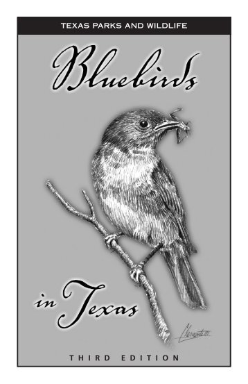 Bluebirds in Texas - Texas Bluebird Society