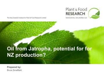 Oil from Jathropha, potential for productio in NZ - Bioenergy ...