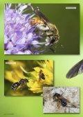 Les abeilles sauvages - Page 5