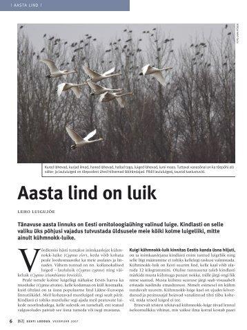 Aasta lind on luik, autor Leho Luigujõe - Eesti ornitoloogiaühing