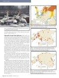 Aasta lind on luik, autor Leho Luigujõe - Eesti ornitoloogiaühing - Page 3