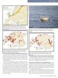 Aasta lind on luik, autor Leho Luigujõe - Eesti ornitoloogiaühing - Page 4