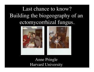 A. phalloides - Harvard University