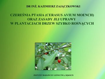 Uprawa plantacyjna czereśni