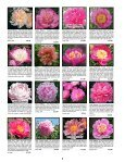 Fine peonies for garden and vase - Fina Gardens Peonies - Page 5