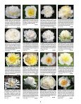Fine peonies for garden and vase - Fina Gardens Peonies - Page 7