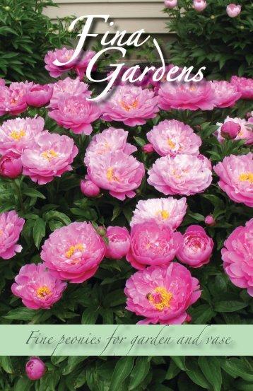 Fine peonies for garden and vase - Fina Gardens Peonies