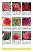 Fine peonies for garden and vase - Fina Gardens Peonies - Page 3