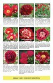 Fine peonies for garden and vase - Fina Gardens Peonies - Page 4