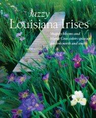 Jazzy Louisiana Irises - Zydeco Louisiana Iris Garden