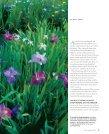 Jazzy Louisiana Irises - Zydeco Louisiana Iris Garden - Page 2