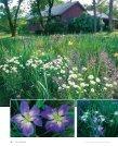 Jazzy Louisiana Irises - Zydeco Louisiana Iris Garden - Page 3