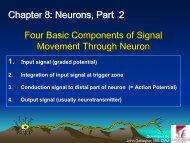Chapter 8: Neurons, Part 2