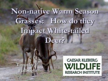 Non-native Warm Season Grasses - Caesar Kleberg Wildlife ...