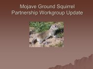 Mohave Ground Squirrel PowerPoint - Desert Managers Group