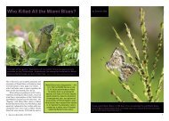 Who Killed All the Miami Blues? - North American Butterfly Association