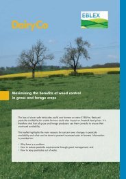 Maximising the benefits of weed control in grass and ... - DairyCo