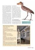 Naturkunde-Museum Bamberg - Der Falke - Seite 2