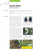 Pasture Pests - Agriseeds Pasture Site - Page 4