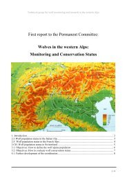 report on the subject of the alpine wolve population