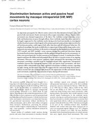 Discrimination between active and passive head movements by ...