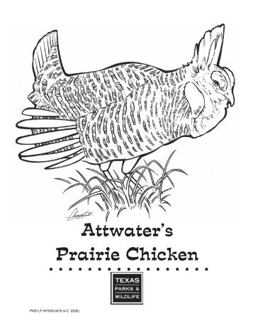Attwater's Prairie Chicken Activities and Lesson Plans - Friends of ...