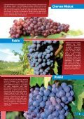 WINE AND CUISINE - Page 7